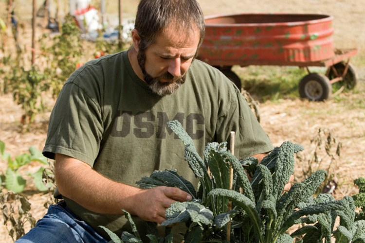 USDA Invests to Support Military Veterans Pursuing Farming and Ranching Careers