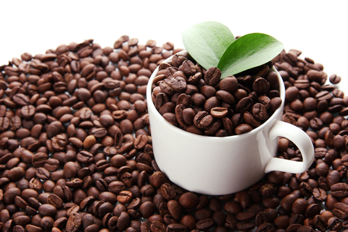 California Coffee Industry Gaining Ground