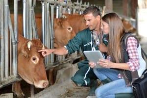 Veterinary Shortages