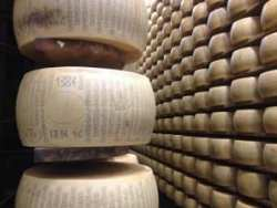 """A wheel of Parmigiano-Reggiano manufactured in January 2014 with DOP marking and """"Parmigiano-Reggiano"""" written vertically around the complete edge of the wheel. An official certification will be stamped into the central oval when it is graded."""