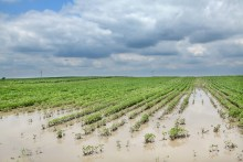 protect crop insurance weather