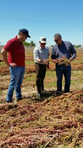 Rick and Steve Benson show organic quinoa production to FSA Administrator Val Dolcini in California's Imperial Valley.