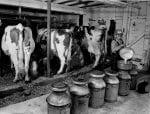 Pennsylvania dairy barn