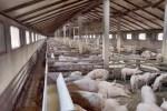 Pig Farm lawsuit