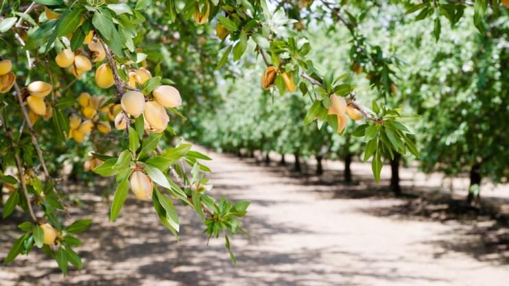 tree nut industry