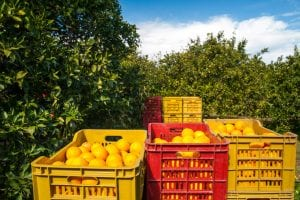 citrus industry groups