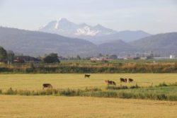 Pacific Northwest Grazing Land