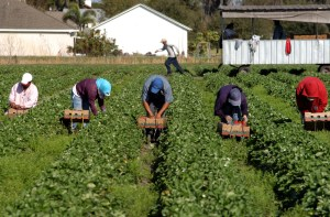 Farmworker Groups
