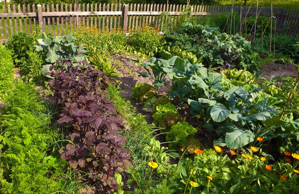 Homemade Organic Pest Control