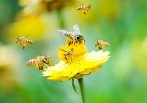 best plants bees