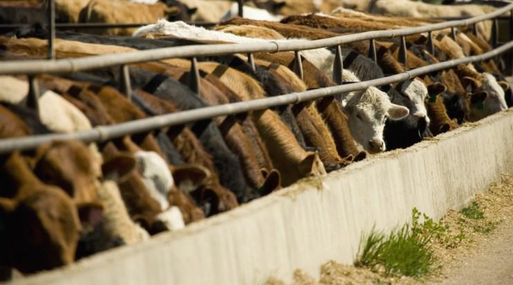 Farm System Reform