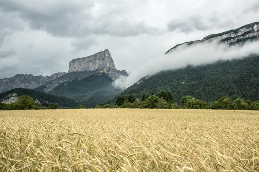 Fields of wheat with Mont Aiguille, Vercors, France