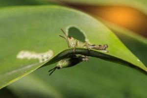 pest diseases funding