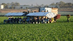 Migrant labor  Workers