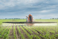 Tractor spraying corn