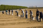 farm-workers-plant-grapes-in-new-california-vineyard-Governor