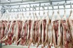 cold-pigs-in-slaughterhouse-2 largest hog