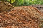 autumn compost