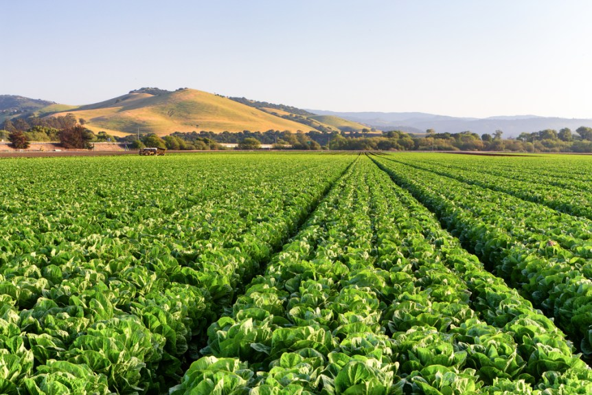 Food Safety Practices And Costs Under The California Leafy Greens