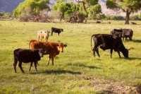 organic label grazing