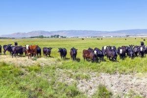 Ranch Easement