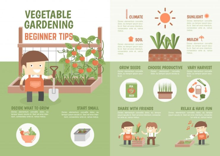 how-to-grow-vegetable-beginner-tips