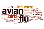 avian-flu-word-cloud-concept import