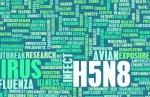 h5n8-concept bird flu