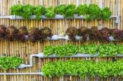 organic-hydroponic-vegetables-vertical-garden