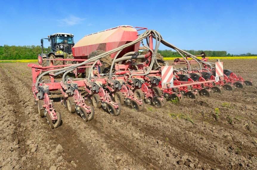 corn plantings