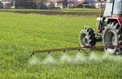 Tractor spraying wheat field with sprayer, pesticides and herbicides