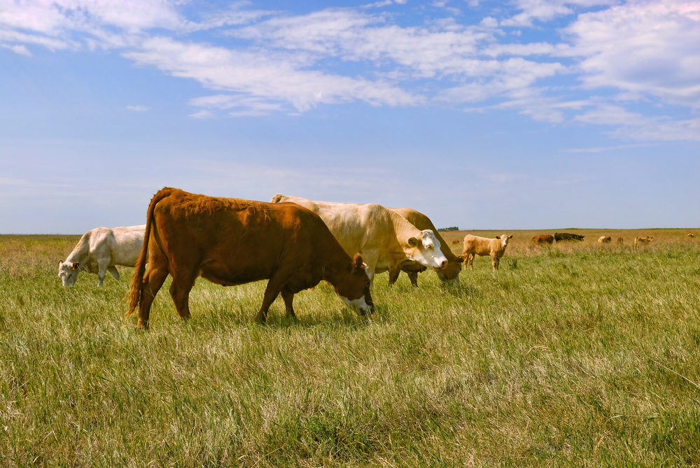 """Featured image for """"State Water Board Encouraging Grazing Survey Participation"""""""