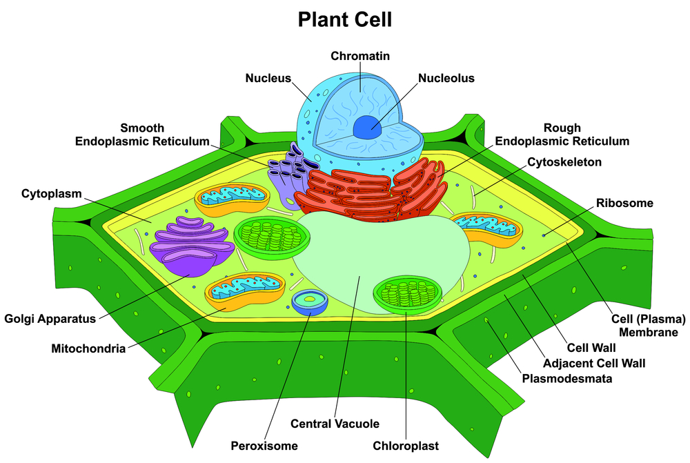 Agri View: Cellular Agriculture   Merlo Farming Group