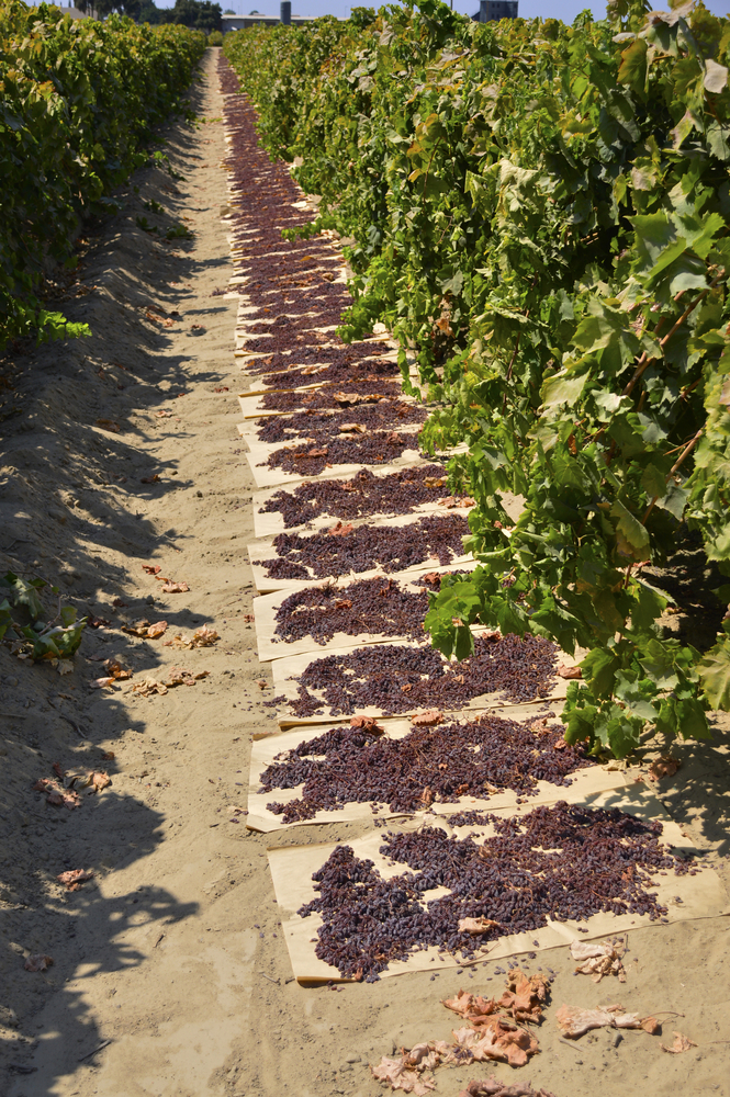 Raisin Growers Must 'Opt-in' to Class Action Lawsuit