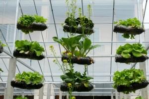 Growing Veggies By Vertical Gardening Agnet West