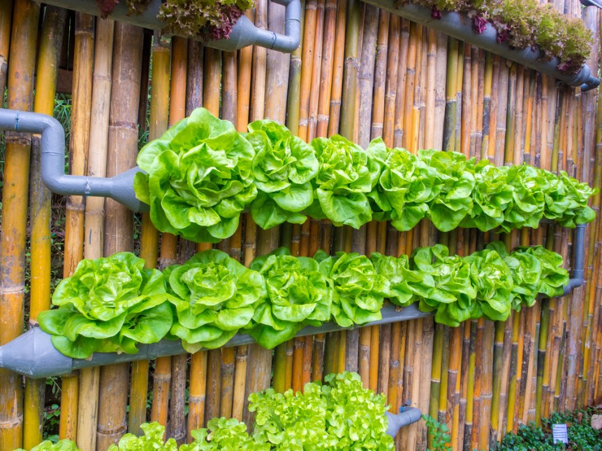 vegetable in decorated wall vertical garden Idea in the city