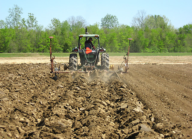 Poultry litter being incorporated into the soil during disking, a process that turns the soil and pulverizes it so that the litter will be mixed into it. Over a 3-year period, ARS scientists determined that yields were cumulatively higher in plots with litter applied in the spring rather than in the fall. (Photo by Haile Tewolde)