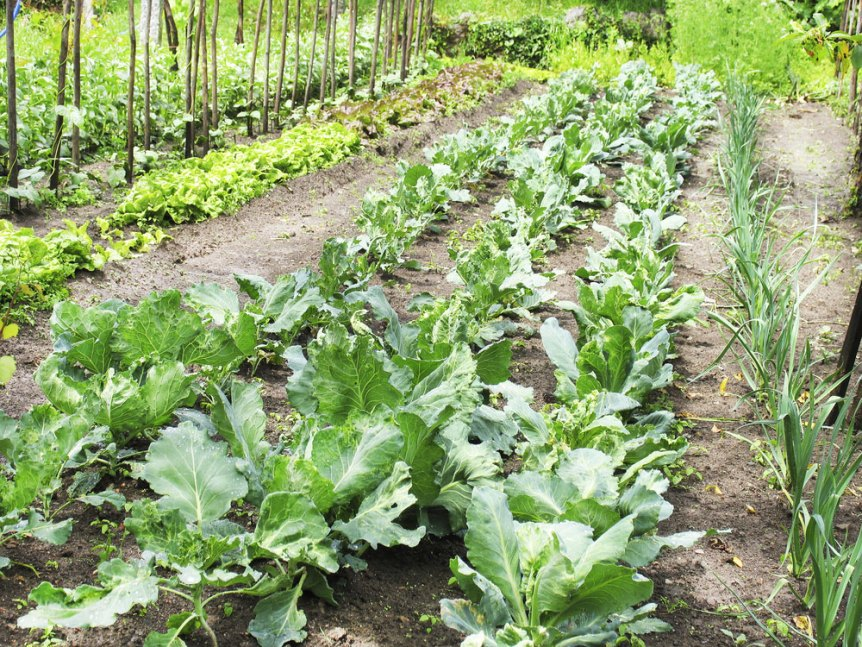 growing organic garden