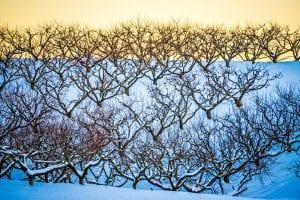 record-setting winter