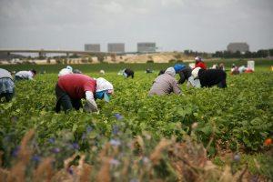 farm labor reform