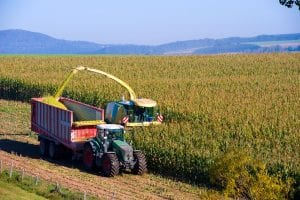 smaller corn