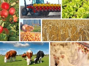 agricultures