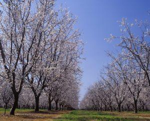 Foliar Disease Protection