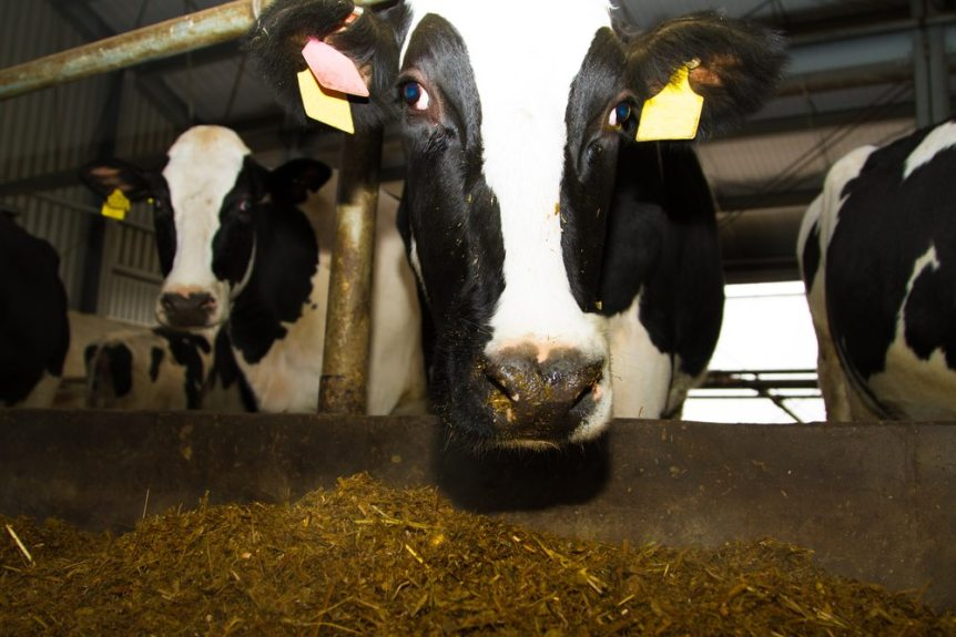 dairy producers