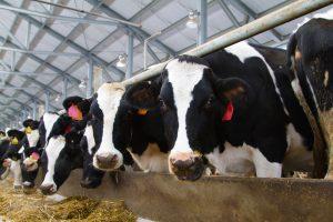 livestock rule