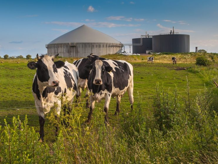 livestock methane