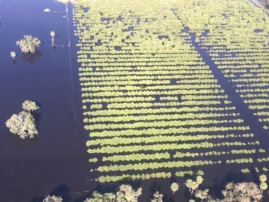 crop losses