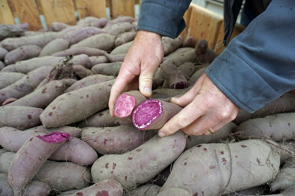 Vibrant Purple Sweet Potatoes are a Healthful Thanksgiving Surprise