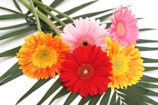 Bouquet from five gerbera daisies.