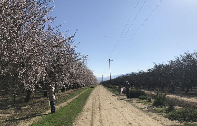 grant pollinator health